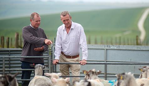 farmers-lamb.jpg