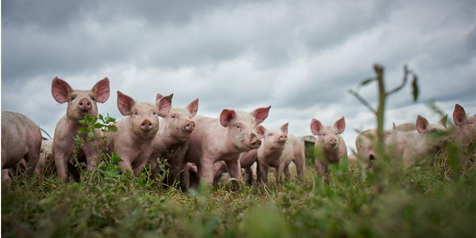 pork-main.jpg